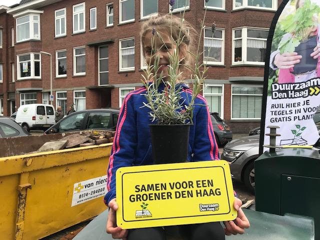 Tegels Den Haag : Meer dan 13.700 tegels ingeruild voor planten. op naar een groener
