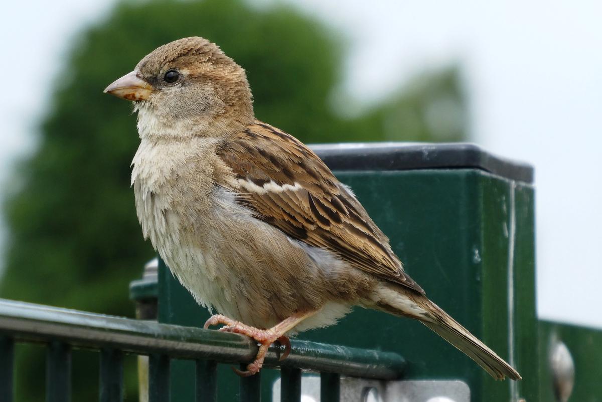Onwijs Woonruimte gezocht! Help onze vogels de winter door - Het Haagse Groen KK-15